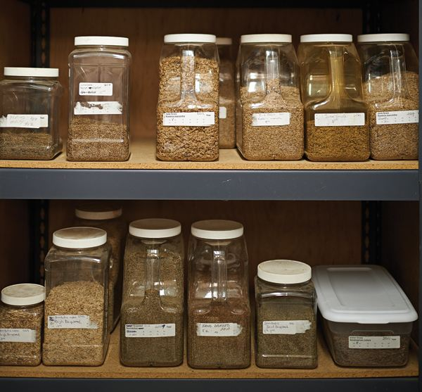 The seeds are stored in a temperature- and humidity-controlled environment until they're needed for restoration efforts.