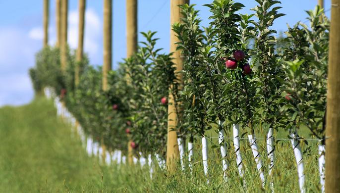 Karnes apple orchard2