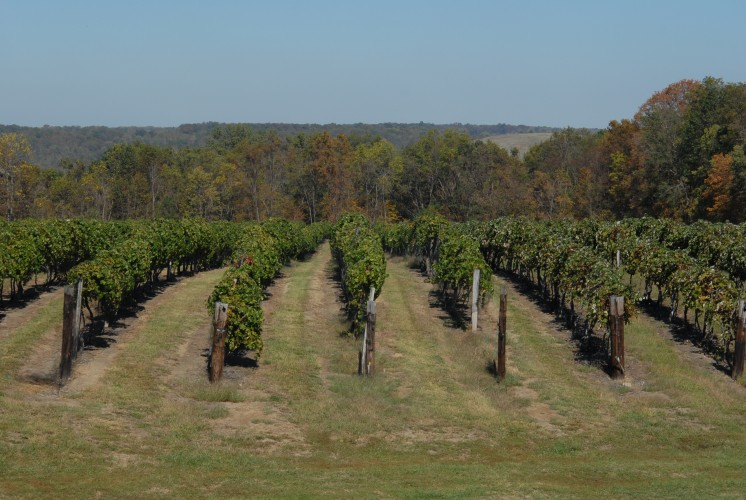 Valley Vineyards offers a stunning landscape upon almost 125 acres of land.