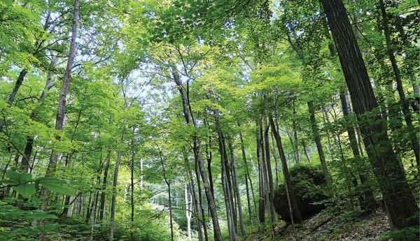The edge of Appalachia Preserve.