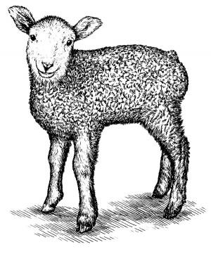 CM_AUG15_FEATURE_Lamb1