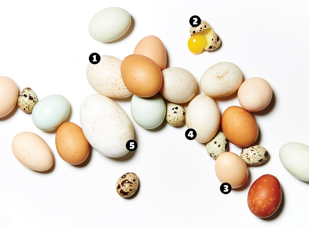 Eggs_WEB