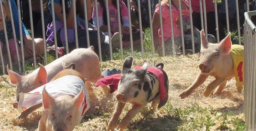 Preble County Pork Festival Facebook