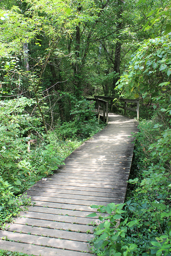 The Kingfisher Trail at Winton Woods park