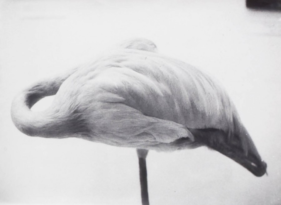 Jochen Lempert, Sponge-Flamingo, from the series Symmetry and Architecture of the Body, 1997-2005, gelatin silver prints