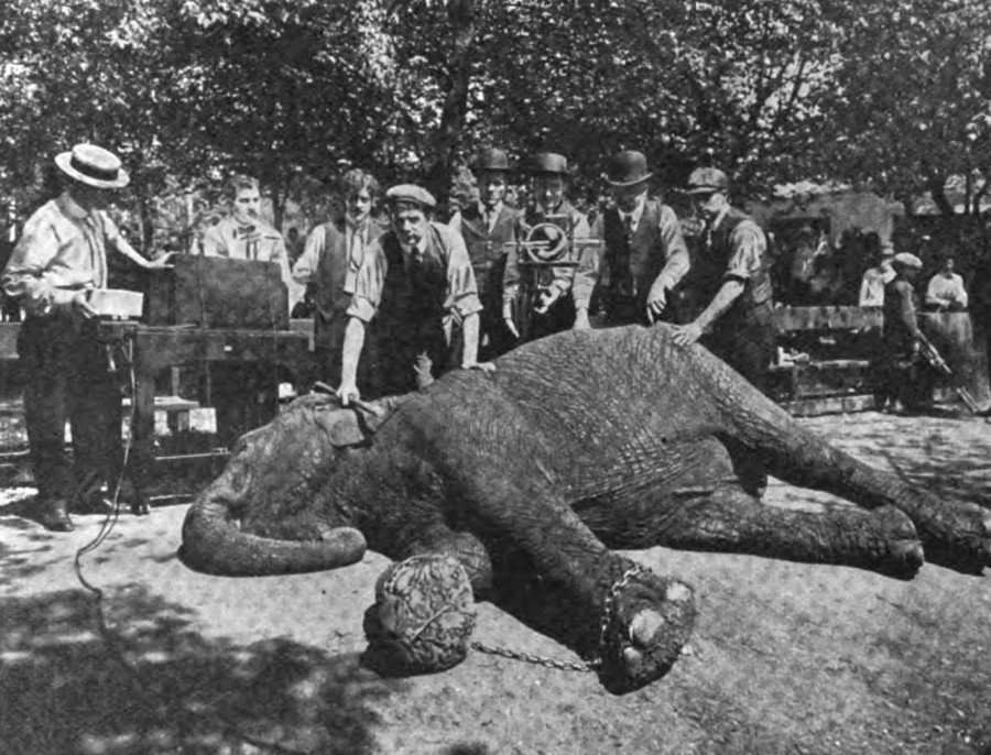 Lady Lou, trained elephant of the W.W. Powers performing troupe, lies in Chester Park as she is x-rayed on 17 May 1908 by Newport's Kelley-Koett Manufacturing Company
