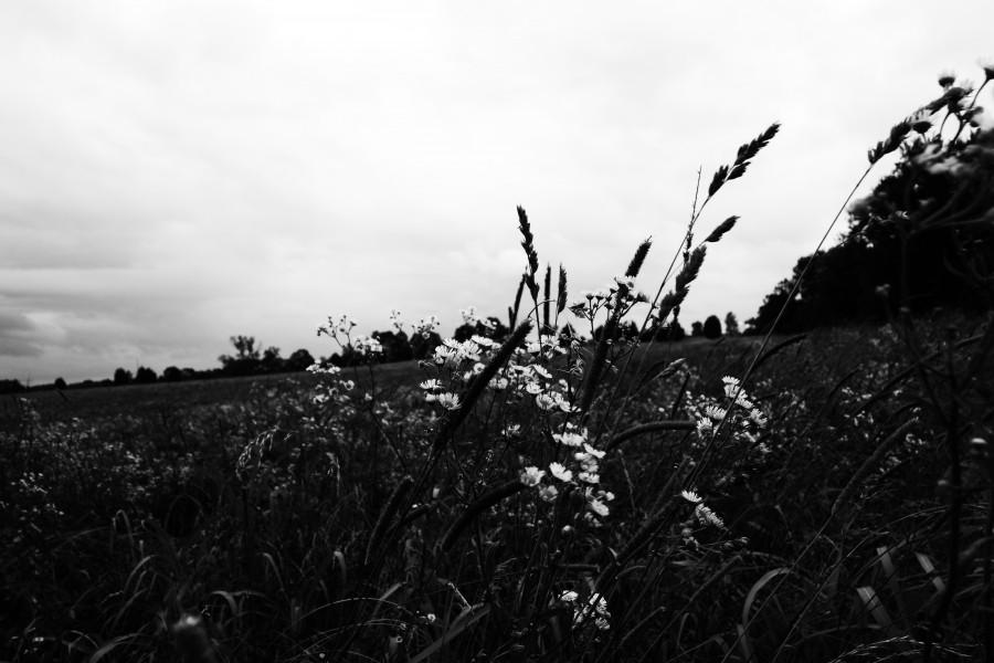 """""""Windy Field"""""""