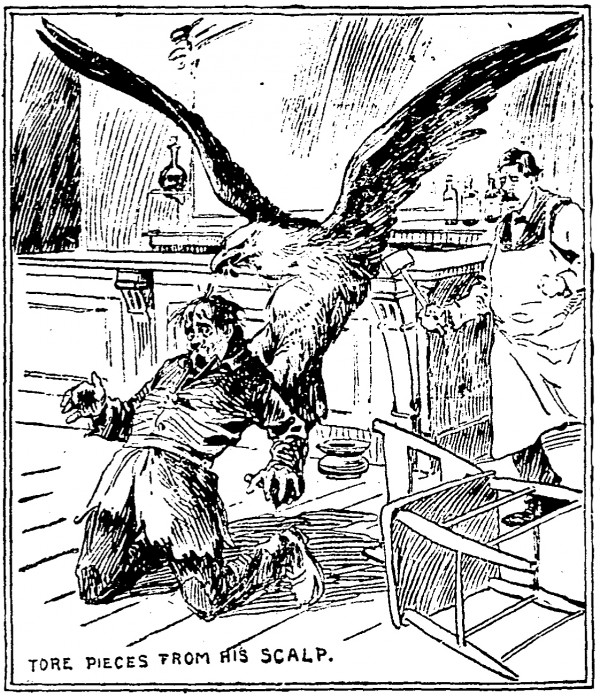 """""""Drawing of eagle attacking tramp,"""" from Cincinnati Enquirer, 1901"""