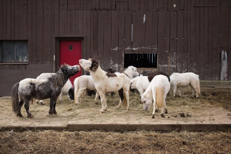 The barn yard at Seven Oaks Farm