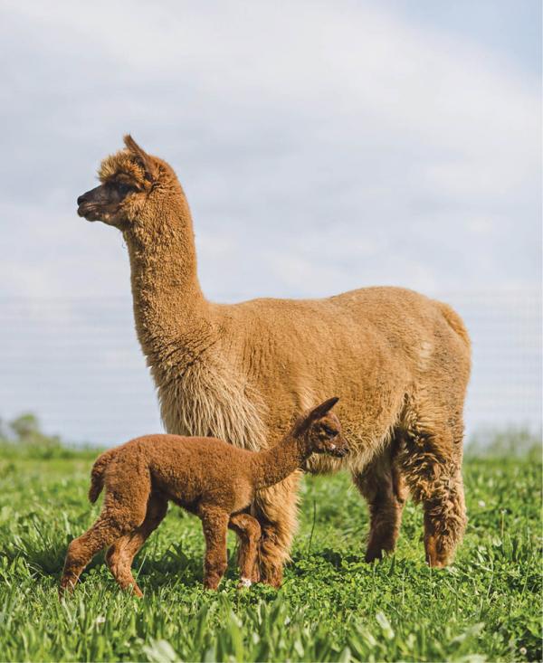 Jessibelle and her five-day-old baby boy, Melnoch