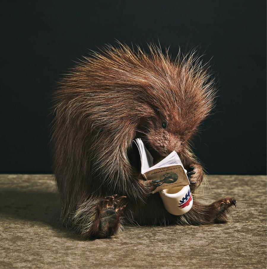 A few of Johnson's creations, including a rather studious porcupine.