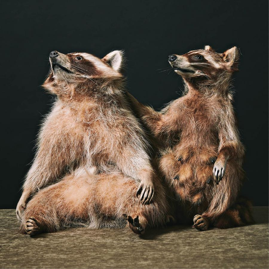 cm_oct16_features_taxidermy7