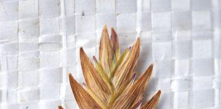 Shaker Trace Seed Nursery