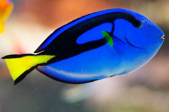 Newport Aquarium Celebrates 15 Years