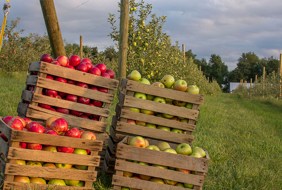 Worth The Drive: Apple Orchards