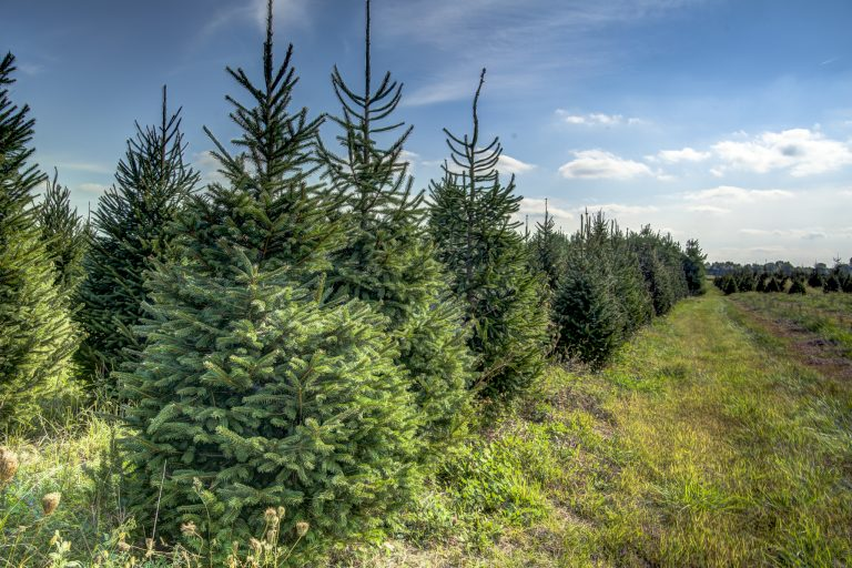Top 5 Places To Get Your Christmas Tree