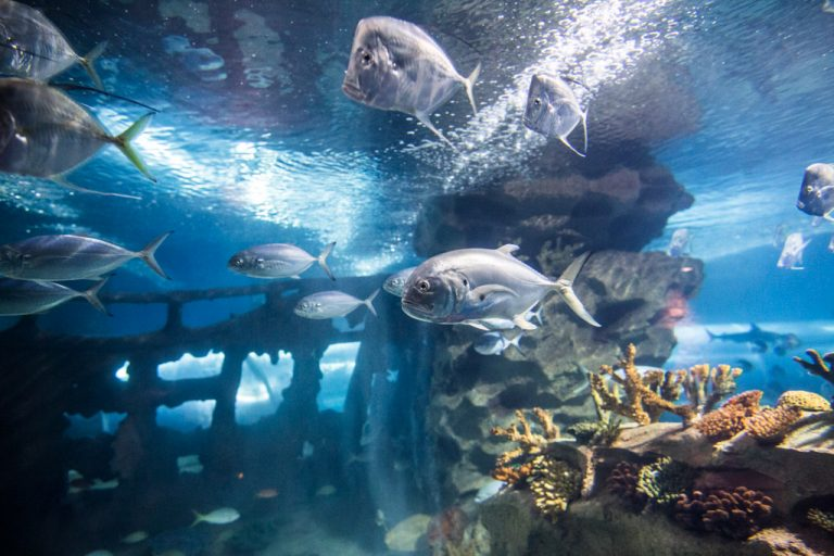 Three Aquariums to Visit This Winter