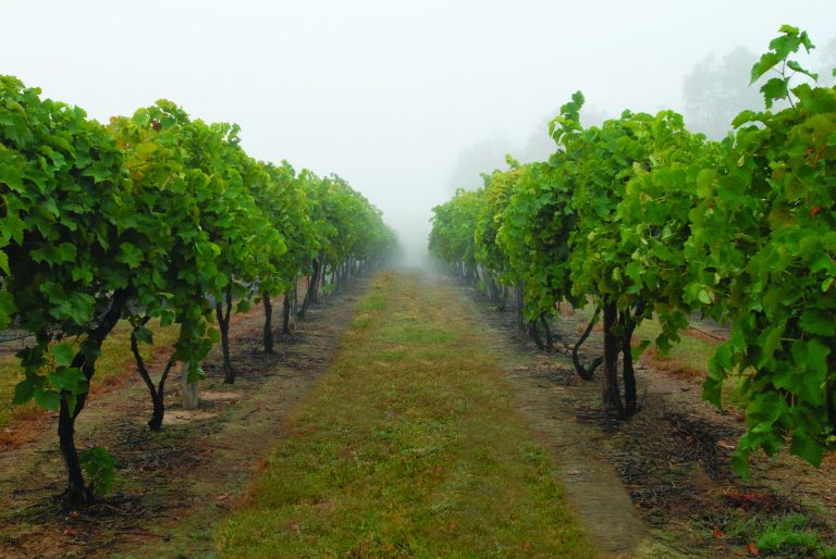 Local Venues for a California Vineyard-Themed Wedding
