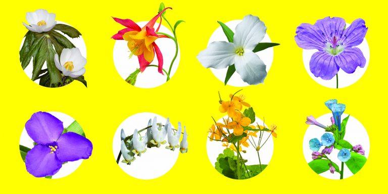 Field Guide: Ohio Wildflowers