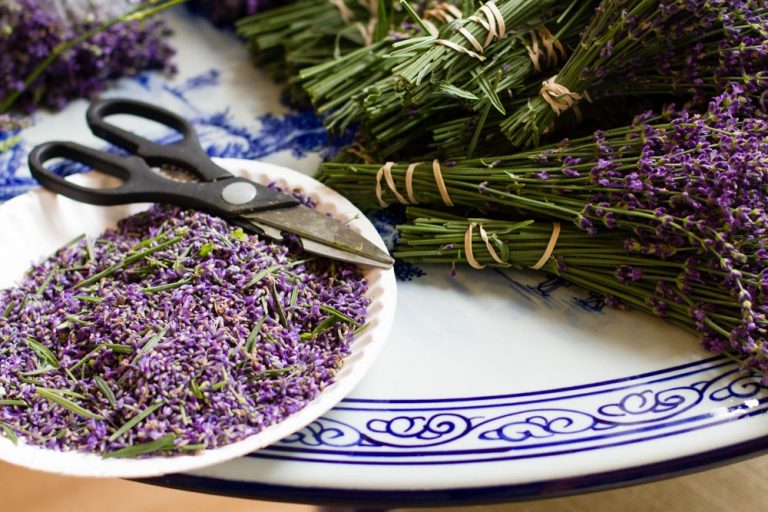 Worth the Drive: One-derings Lavender Farm