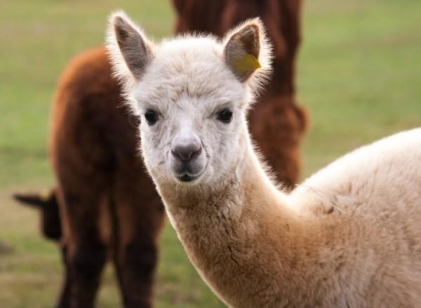 Top 5 Educational Animal Experiences