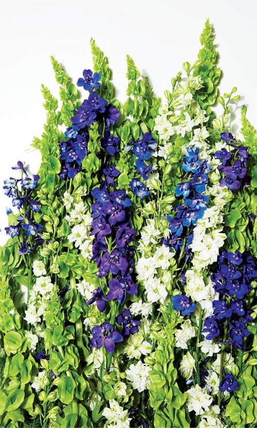 Zinncinnati Florist