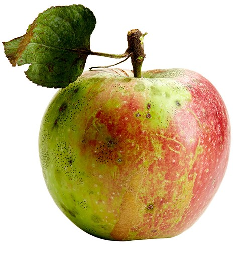 CM_OCT15_DINE_Apple_Turley