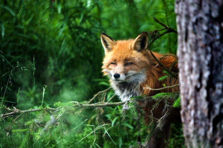 Hot Ticket: The Camargo Hunter Trials