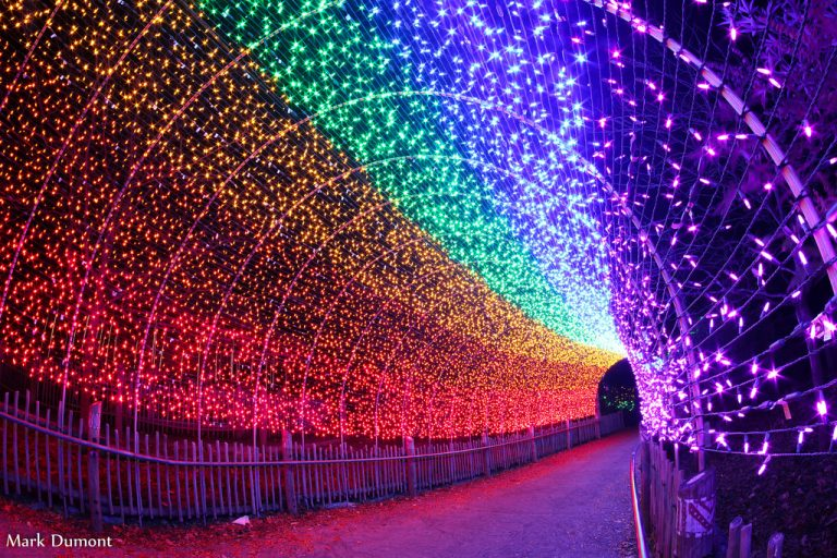 Top 5 Holiday Light Displays