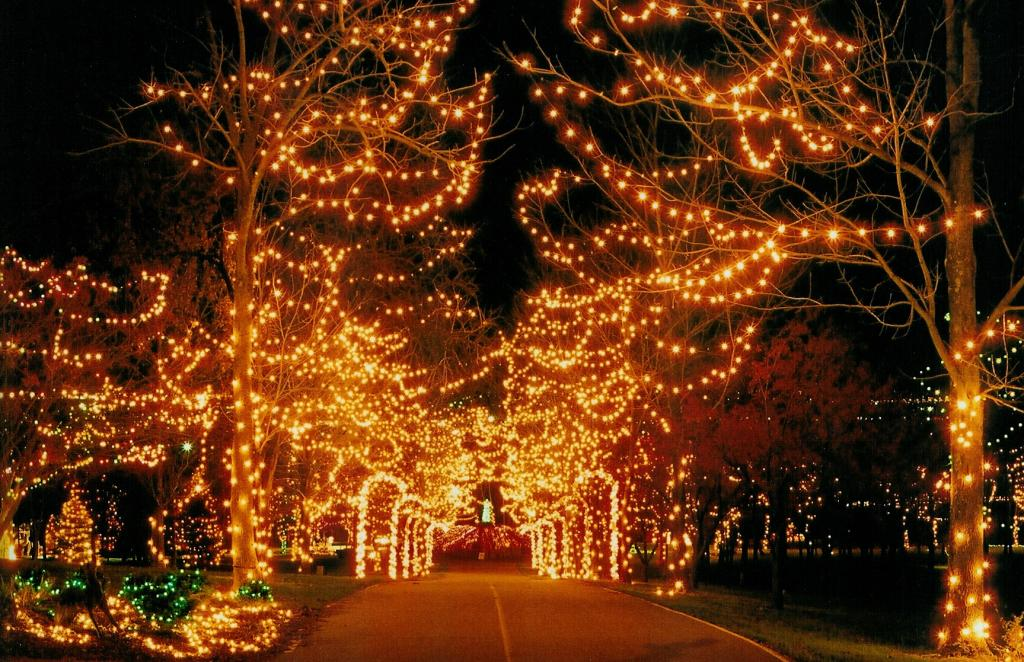 holiday-lights-pic