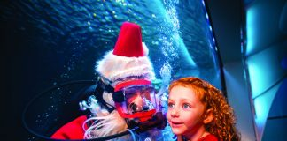 Scuba Santa is coming to town. Photo courtesy of Newport Aquarium.