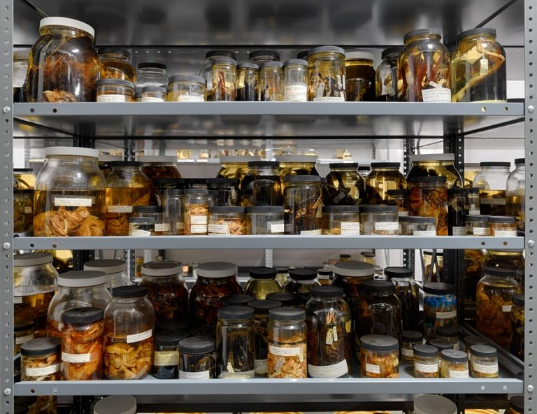 Cincy Obscura: Behind the Scenes at the Geier Collections & Research Center