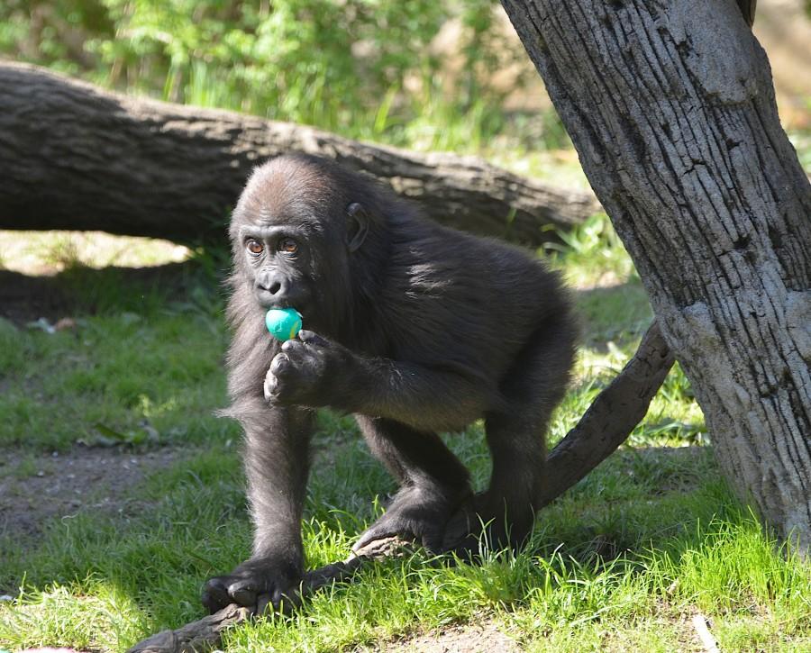 The Cincinnati Zoo
