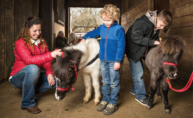 Cincy Obscura: Miniature Therapy Horses at Seven Oaks Farm