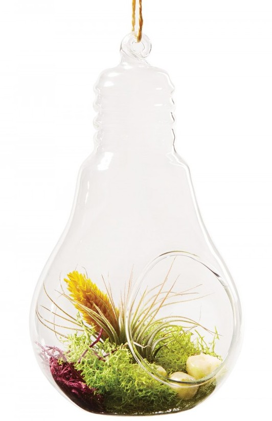 Glass Houses Live moss and a mini air-plant fit snugly in a glass light bulb, making it possible to hold a garden in the palm of your hand. Live Trends glass light bulb terrarium, $18, Zinncinnati, zinncinnati.com