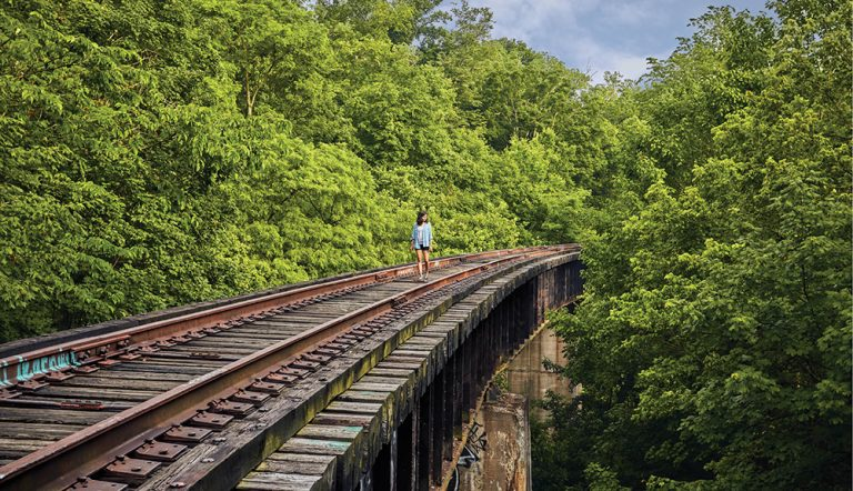 A Bike Trail in the Treetops? It Could Happen.