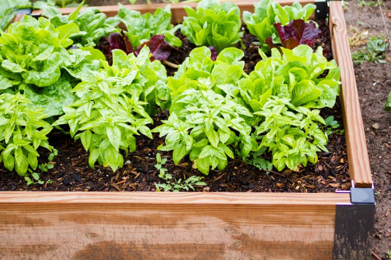 How To: Choose a Community Garden