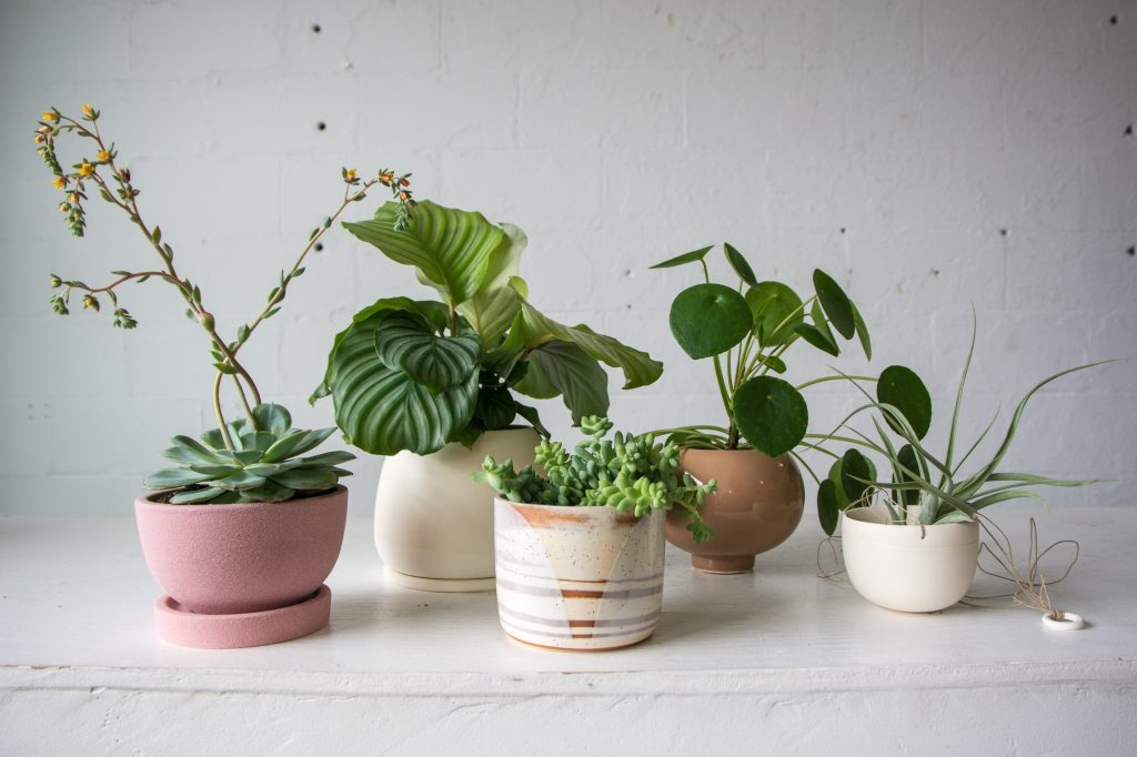 Our Five Favorite House Plant-Planter Combos - Cincinnati