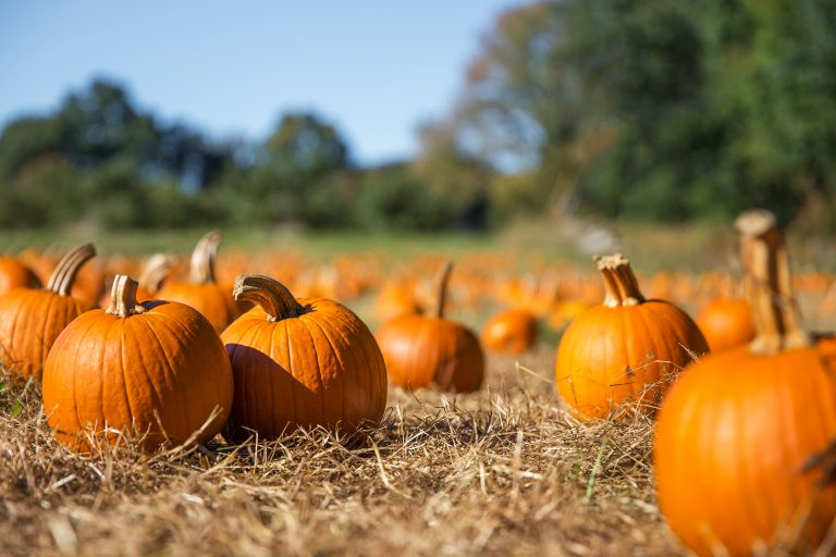 Six Local Pumpkin Patches to Check Out Now
