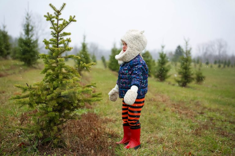 Real Christmas Trees Are Going Fast This Year